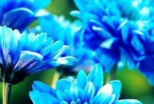 blue / by Diane