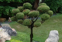 ~ greener pastures ~ / Green thumb? Why not try a green-themed garden?  / by Atlanta Botanical Garden