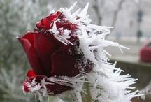 Winter--Shiminter