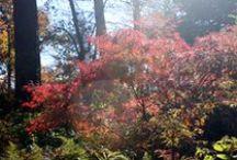 ~behold autumn~ / by Atlanta Botanical Garden