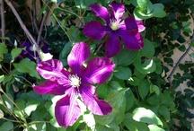 ~fragrance garden~ / by Atlanta Botanical Garden