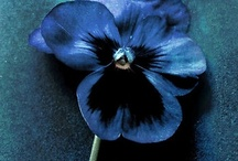 BLUES, INDIGO, & DENIM