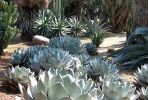 Garden: succulents, tillandsias & terrariums