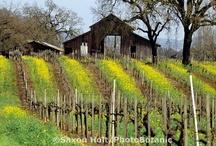 DESIGN:  CA Wine Country Design / Interior and Exterior Designs specific to the CA wine country design sensibility .. natural, organic, rustic elegance.. CA farm vernacular