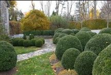 GARDEN..Boxwood & Formal Designs / showing all forms of boxwood and how it's used in the garden. Plus, select topiary and formal designs.
