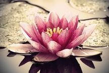 Garden, Flowers, Flowers, Garden / by Kendall Rossiter