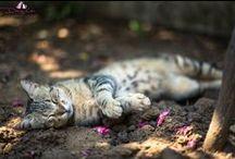 Stray Cats / Stray cats in Turkey