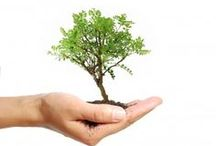 Green Home / Eco-friendly ideas for saving energy and money at home.