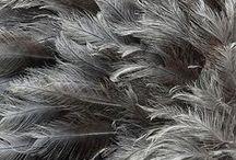 Grey / Gris