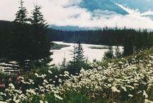 nature / breath