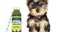 Daily Greens Furry Friends