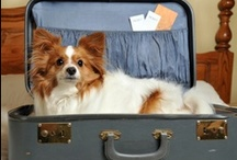 """Traveling with Pets / In the USA, it is estimated that over 500,000 pets travel by plane each year. This figure also claims that 160 million plus people travel by air. Flying with a pet can be expensive and complicated. You must do your research as the rules do vary from airline to airline. The conditions and requirements for pet carriers must conform to the """"airline rules"""" for traveling with pets. The rules for flying as cargo or in the cabin must be according to the airline's stated policies."""
