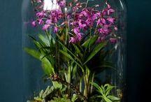 Verde / piante, fiori