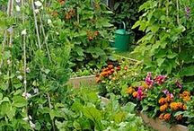 Garden ideas / Easy ideas to boost production  or decorate the grounds.