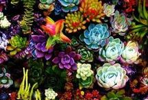 Succulents and pots / What I would like to grow in our drying climate, and how