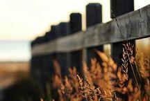 HERBST / Golden light, warm sunshine, colorful leaves and that kind of melancoly you only feel in autumn.   Goldenes Licht, die letzten warmen Sonnenstrahlen, bunte Blätter und dieses Gefühl von Wehmut, das man nur im Herbst fühlt.