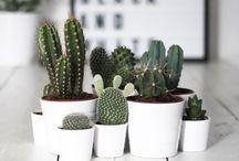 Plantas | Inspiração | Decoração