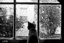 Rain Rain Rain... / Rain & rainy days & more rain.