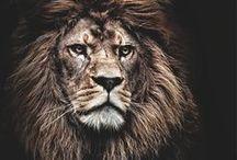 Andarian king