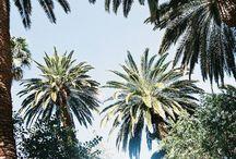 palm / Palmbomen om van te genieten