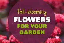 Flowers 101 / A collection of flowers types and where to plant them