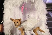 Fabulous Feather and Fur Follies / On November 14, 2014 Loving All Animals held a benefit reminiscent of the now closed Palm Spring Follies to raise money for the Palm Spring Animal Shelter and their Super Pet Adoption Fair. There were Jugglers, Acrobats, Magicians and of course a Bevy of Beauties who, in this case were dogs. Their costumes, made by Spoiled Dog Designs were made from Palm Springs Follies fabric. And like any great showgirl, they had amazing feather displays adoring them.