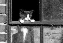 Pleasant ANIMALS / Animals, cats, dogs, birds