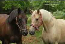 My Work - Horses / My equine work, hopes you enjoy it.