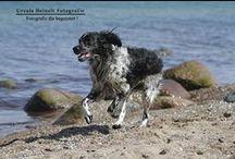 My Work -Dogs / Der Hund –Freund und treuester Begleiter des Menschen. http://www.uheinelt-fotografie.de/tiere/hunde.html