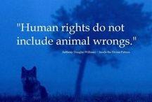 Eläinten oikeudet