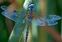 My dragonfly.