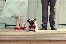 Amor animal ~ Wedding Pets / Perros, gatos... las mascotas son parte de la familia y no pueden faltar en este día tan tan especial. Pets at Weddings