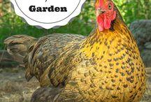 Pleasant FARMS / Chicken coops, barns, farming
