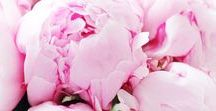 Blomster / Tulips | Peonies | Pink | White