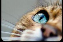 Eyes to die for!