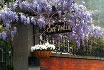 Cafe Amelie Entrance