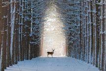 Landscape Photography / Awesome landscape photography