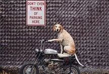 Two Wheels, Four Paws / Man's best friend loves to ride too!