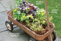 garden ideas / piante fiori