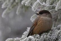 l'hiver magnifique