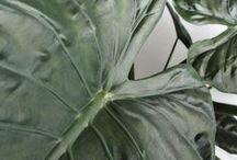 NATURE / Discover the power of organics through nature.