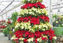 Christmas Flower & Plant Ideas by Bloomers Flower shop. Poinsettias, ornaments, x-mas trees / Holiday Flowers and Ideas