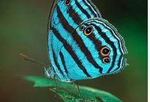 Butterflies, moth & caterpillars