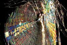 Webs / by Crystal Takemoto