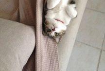 MonaTheCat / My cat