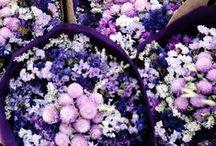 Flowers&Çiçekler