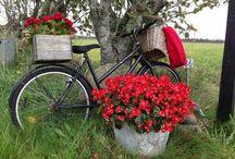 Bikes&Bisikletler