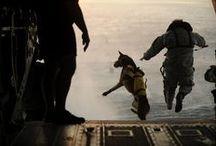 Animali: amici ed eroi!