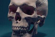 anatomy for the artist / HEAD & FACE