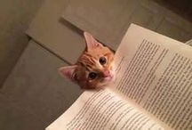 Animali & libri / #libri #gatti #gattini #cani #animali #books #dogs #cats #pets / by Finzioni Magazine